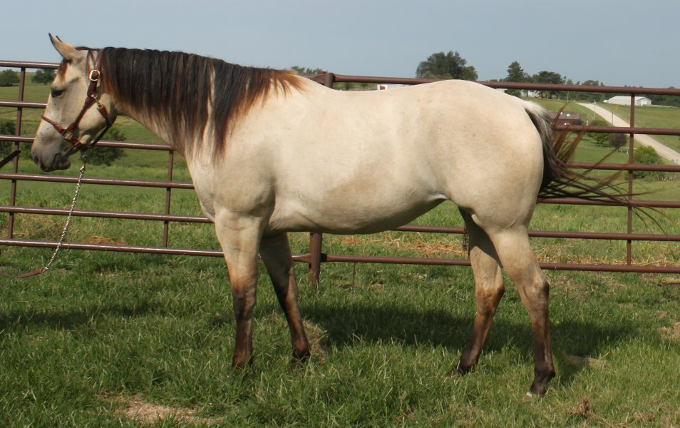 HORSE COLOR EDUCATIONAL PAGES: Learn about blue roan ...